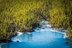Zakończenie up zamarznięta wodna kałuża w polu z zielonym świeżym cr zdjęcia stock
