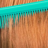 Zakończenie up zieleni grępla w czerwonym włosy Zdjęcia Stock