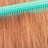 Zakończenie up zieleni grępla w czerwonym włosy Obraz Stock