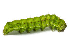 Zakończenie up zielona gąsienica, odizolowywający na bielu obraz royalty free