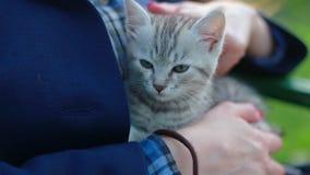 Zakończenie w górę ślicznego kota w kobiet rękach zdjęcie wideo