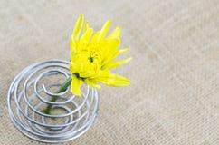 Zakończenie w górę żółtego kwiatu na stole Fotografia Stock