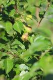 Zakończenie w górę fotografii małe narastające bonkrety na zielonych liściach zdjęcia stock