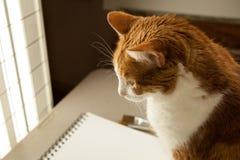 Zakończenie w górę kota profilu patrzeje w lekkich kiciunia bokobrody podkreślających obraz stock