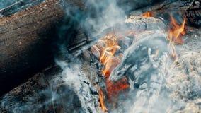 Zakończenie w górę ognisko płomieni campingu ogień, Super zwolnionego tempa płonąca łupka zdjęcie wideo