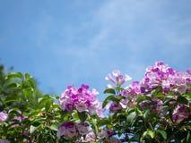 Zakończenie w górę pięknych menchia kwiatów, zieleni i opuszcza przeciw niebieskiego nieba tłu obraz stock