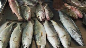 Zakończenie w górę ryby dla sprzedaży przy rynkiem na copacabana plaży w Rio zbiory wideo
