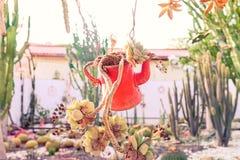 Zakończenie w górę tłustoszowatych rośliien w zawieszonego starego rocznika podlewania czerwonej puszce jako kwiatu garnek w kakt Obrazy Stock