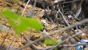 Zakończenie w górę zieleni opuszcza na gałąź i przesunięciu ostrość na śmieci w przedpolu z żółtymi liśćmi wtedy Grat jest zdjęcie wideo