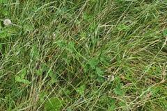 Zakończenie w górę zielonego pola z kwiatami i trawą w lecie obraz royalty free