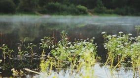Zakończenie widok mgła i rośliny wodne unosi się nad wodą, jezioro Piękny ranku krajobraz przy lasem zbiory