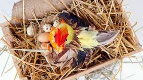 Zakończenie, widok od above, obracanie świąteczny Wielkanocny skład W drewnianym pudełku w słomie, tam jest mały karmazynka zdjęcie wideo