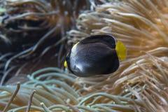 Zakończenie widok rafowa ryba zdjęcia royalty free