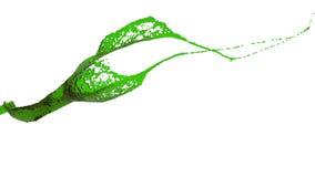 Zakończenie widok zielonego koloru chełbotanie jasny ciecz ilustracji