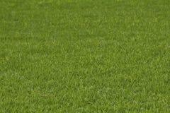 Zakończenie wizerunek świeżej wiosny zielona trawa Obrazy Royalty Free