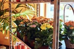 Zakończenie wizerunek kwiatu sklep z różnorodność kolorową wiosną kwitnie w garnkach Obrazy Stock