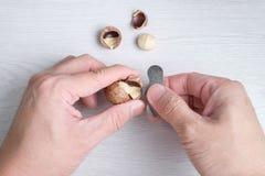 Zakończenie wręcza otwarcia macadamia skorupę Zdjęcie Stock