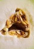 Zakończenie zieleni melonowi pypcie.  Owoc, dieta i zdrowy odżywianie. Fotografia Stock