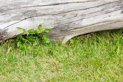 Zakończenie zielona trawa i nieżywa drewniana bela, tło Obrazy Stock