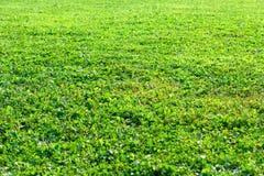 Zakończenie Zielonej trawy powierzchni Naturalny tło Obraz Stock