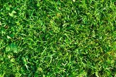 Zakończenie Zielonej trawy powierzchni tła Naturalna tekstura Zdjęcia Royalty Free