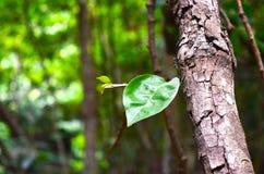 zakończenia drzewo Obraz Royalty Free