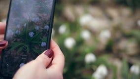 Zako?czenie Żeńskie ręki biorą obrazki, krótkopędu wideo na telefonie komórkowym, gadżet biali mali kwiatów pączki, śnieżyczki we zbiory wideo