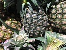 Zakończenie ananas Obraz Stock