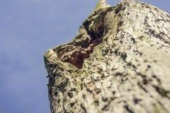 Zakończenie barkentyna drzewo obraz royalty free