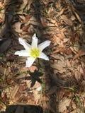 Zakończenie dziki kwiat Obraz Royalty Free