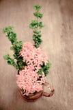 Zakończenie kolca czerwony kwiat Fotografia Royalty Free