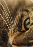 Zakończenie kota oko Zdjęcie Royalty Free