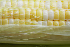 Zakończenie kukurudza na cob Obraz Stock