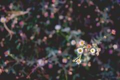 Zakończenie kwiat Zdjęcia Royalty Free