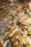 Zakończenie piec wieprzowiny tenderloin Fotografia Royalty Free