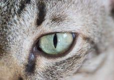 Zakończenie portret kotów oczy Obrazy Stock