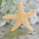 Zakończenie rozgwiazda - morska zdrój dekoracja Obrazy Stock