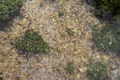 Zakończenie rzeka, rzeczne algi na dnie Obraz Royalty Free