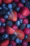 Zakończenie up jagody na owoc torcie Obraz Stock