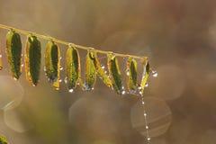 Zakończenie up trawa kolce z wodnymi kroplami Obraz Royalty Free