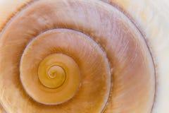 Zakończenie widok seashell Obrazy Royalty Free