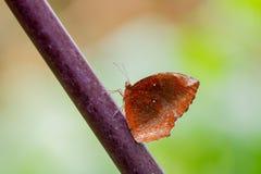 Zakończenie motyl Fotografia Royalty Free