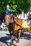 Zakopane, Польш-июль 3,2015: Обузданные стойки лошади, на Krupo Стоковая Фотография RF