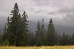 zakopane тумана стоковое изображение