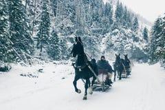 ZAKOPANE, POLÔNIA, o 10 de fevereiro de 2018, diversos chicotes de fios de um slei foto de stock royalty free