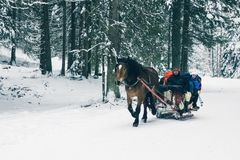 Zakopane, Poland, February 10, 2018, Harness of a sleigh drawn royalty free stock images
