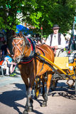Zakopane,Poland-July 3,2015:Harnessed Horse stands, at the Krupo Royalty Free Stock Photography