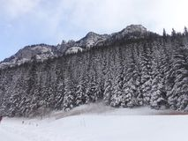 Zakopanebergen - op de manier aan Koscieliska-Vallei in de winter Stock Foto