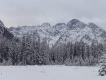 Zakopanebergen - op de manier aan Morskie Oko in de winter Stock Afbeeldingen