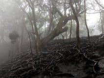 zakorzenia drzewa zdjęcie royalty free